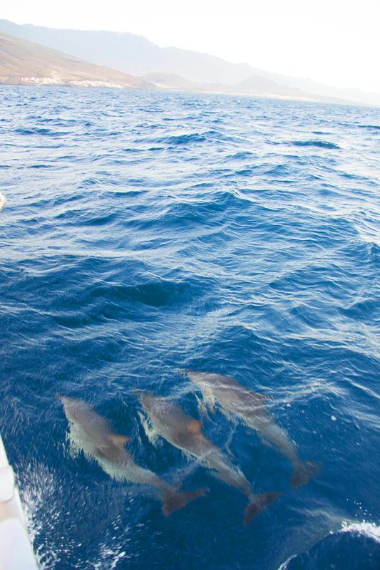Дельфины и яхта